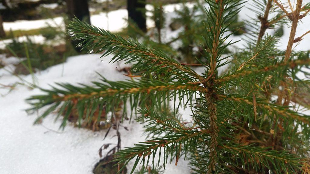 Pe urmele pașilor de pe zăpadă