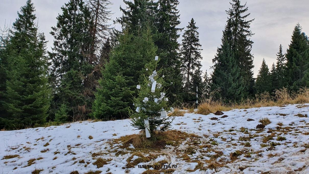 În prag de Crăciun la Cabana Piatra Mare