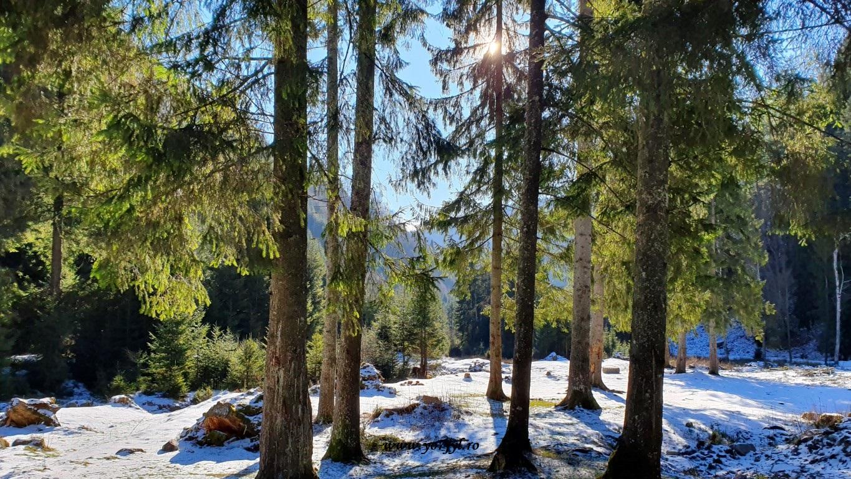 În căutarea zăpezii de ianuarie