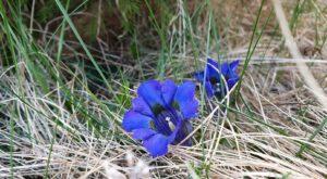 Prima drumeție cu miros de primăvară … și libertate