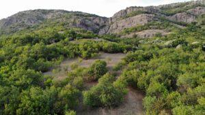 Arome de iunie prin Munții Măcinului