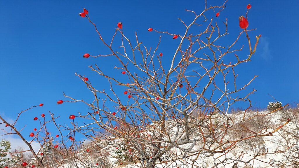 Flori de iarnă